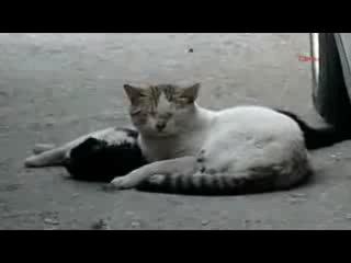 Трагичное видео про настоящюю любовь. Пробивает до слез!